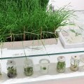 Nature–Future: Rostliny budoucnosti