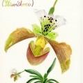 Malujeme s Botany 2013