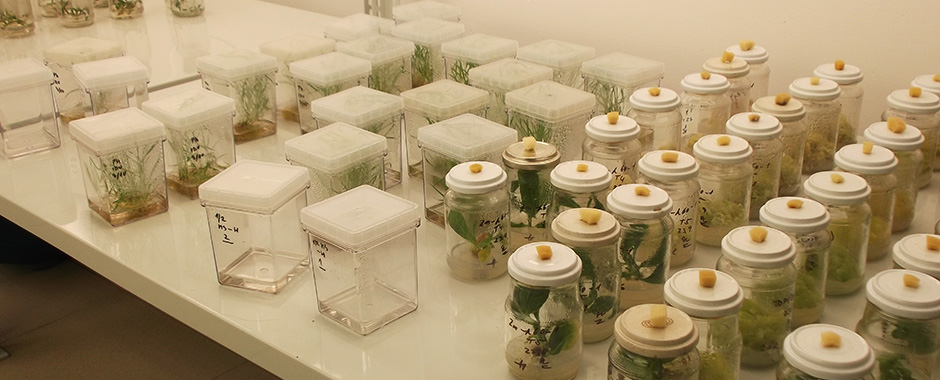 Cultivation room for plant cultivation in vitro